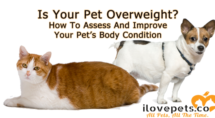 How To Tell If Your Pets Are At A Healthy Weight