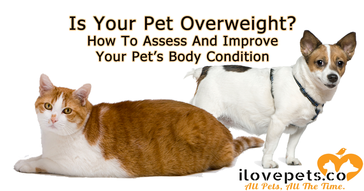 How To Tell If Your Pets Are Overweight