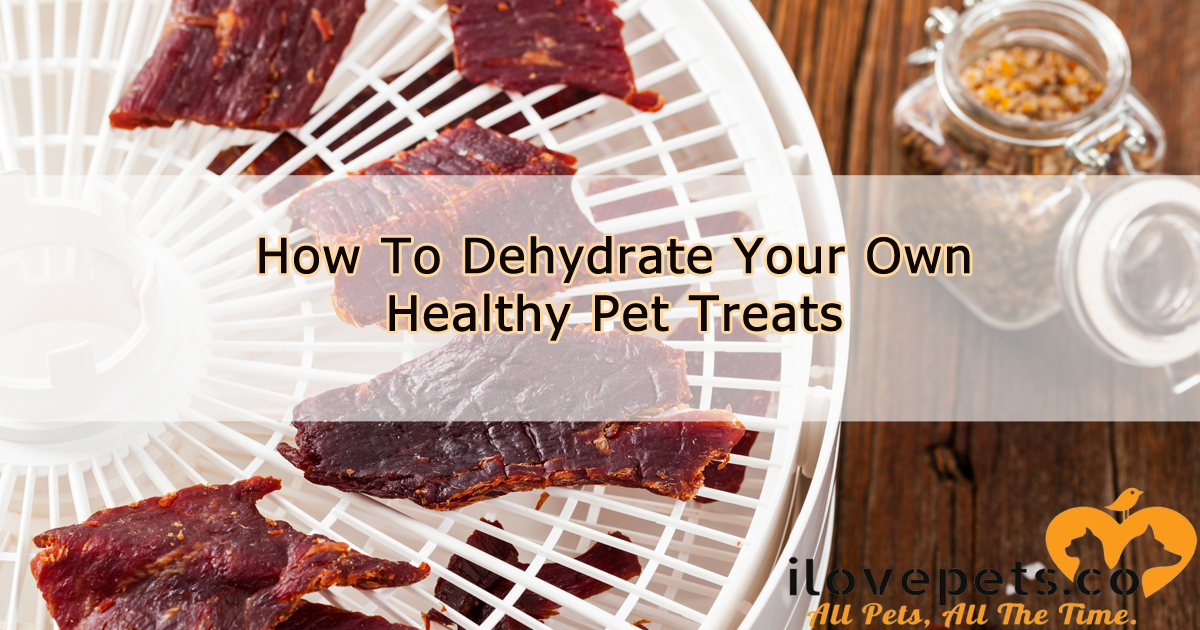 How To Dehydrate Your Own Healthy Pet Treats