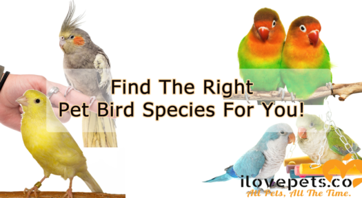 Find The Right Pet Bird Species For You!