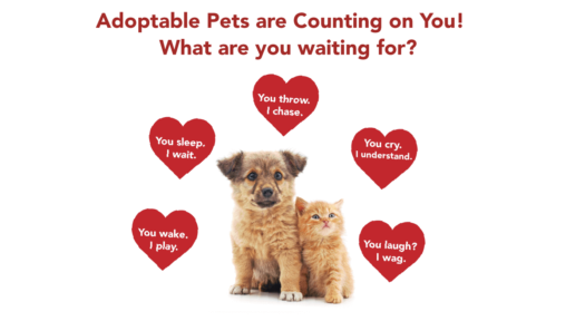 Why You Should Adopt A Pet From A Shelter