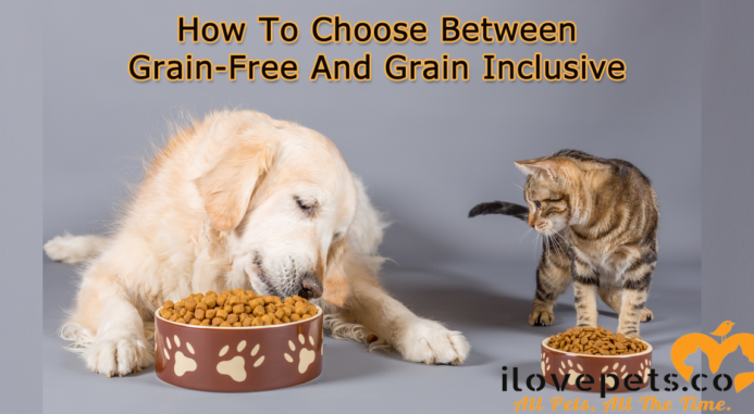 How To Choose Between Grain-Free And Grain-Inclusive Pet Food