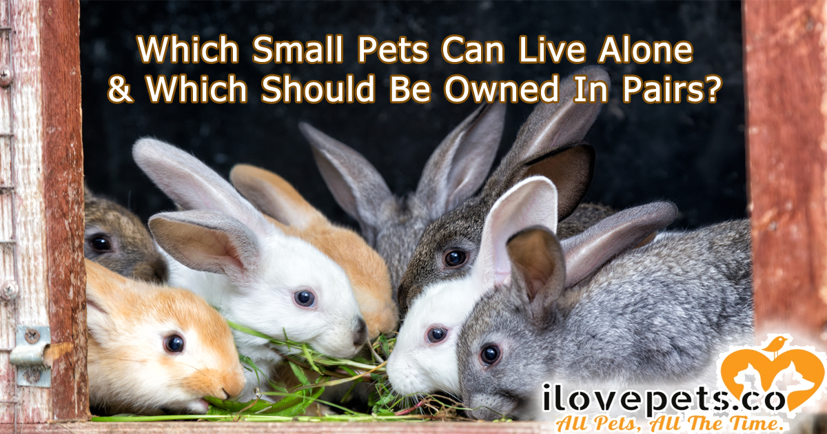 Which small animals should be housed solo, and which need to live in pairs or groups?