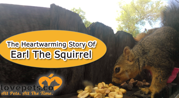From Rescue To Rehab – The Story Of Earl The Squirrel