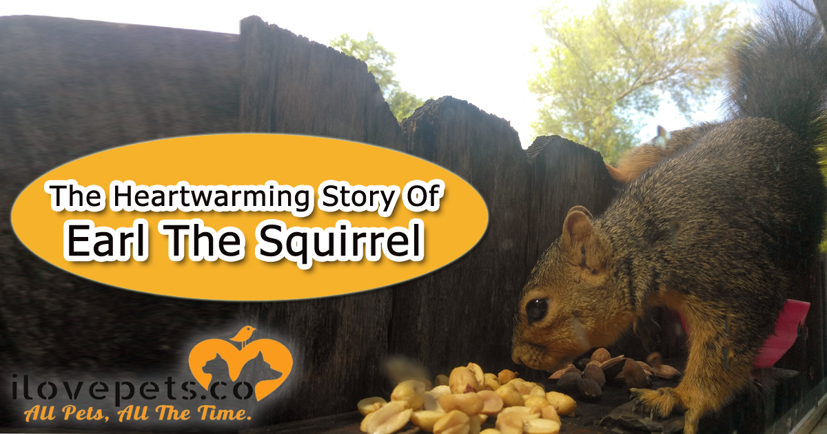 Earl The Squirrel Rescue Story