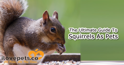 The Ultimate Guide To Raising A Baby Squirrel, Feeding And Rehabilitation