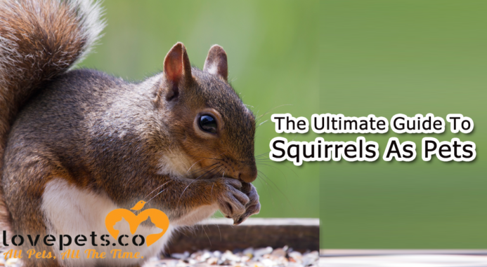 The Ultimate Guide To Squirrels As Pets