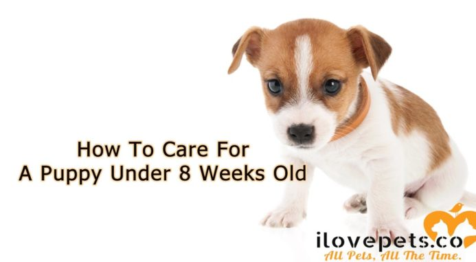 How To Care For A Puppy Under 8 Weeks Old