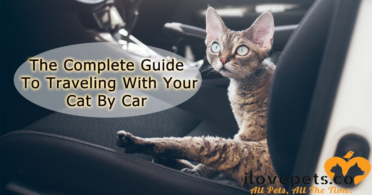 The Complete Guide To Traveling With Your Cat By Car