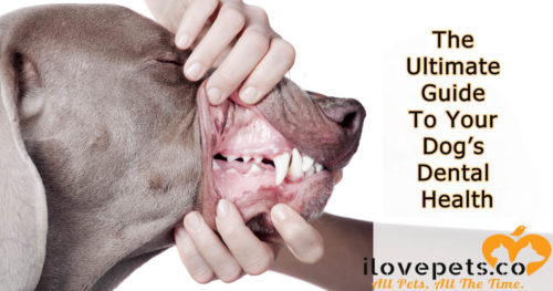 The Ultimate Guide To Your Dog's Dental Health