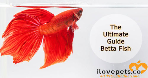 The Ultimate Guide To #BettaFish