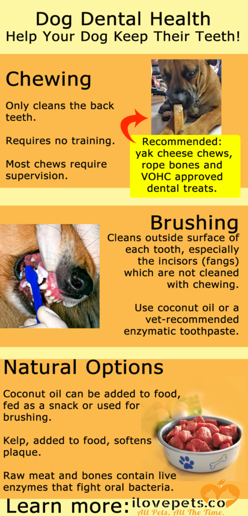 Dog dental health options: brushing, chewing and natural dental health solutions.