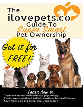 ilovepets.co Guide To Super Smart Pet Ownership