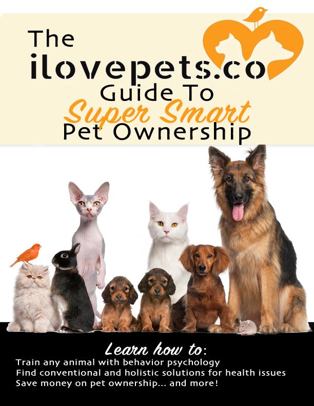 Super Smart Pet Ownership Guide
