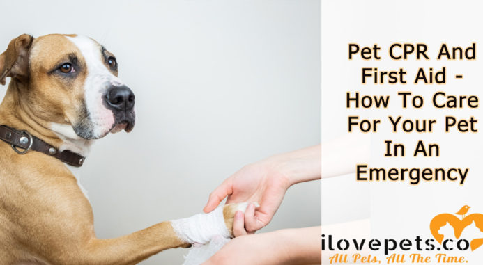 Pet CPR And First Aid – How To Care For Your Pet In An Emergency