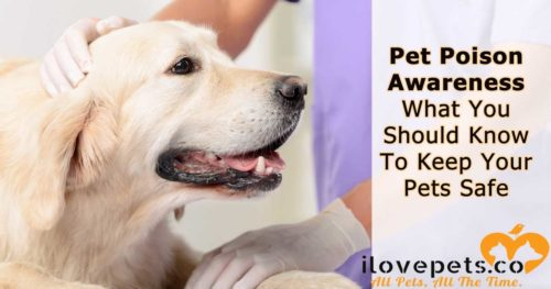 Pet Poison Awareness - Household Toxins