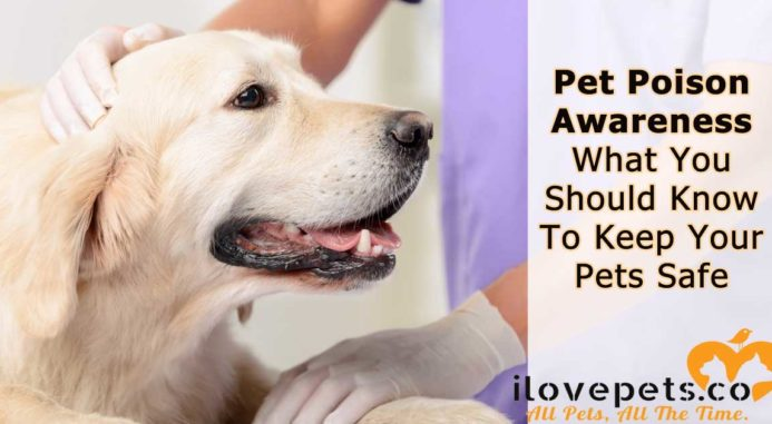 Pet Poison Awareness – What You Should Know To Keep Your Pets Safe
