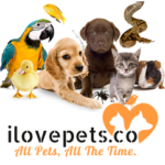 All Pet Supplies