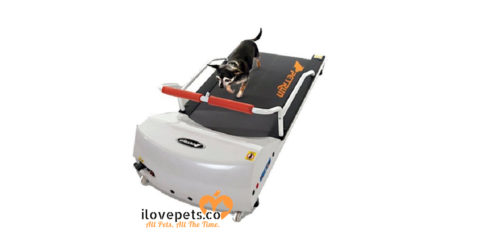 Pet treadmill PetRun made by GoPet