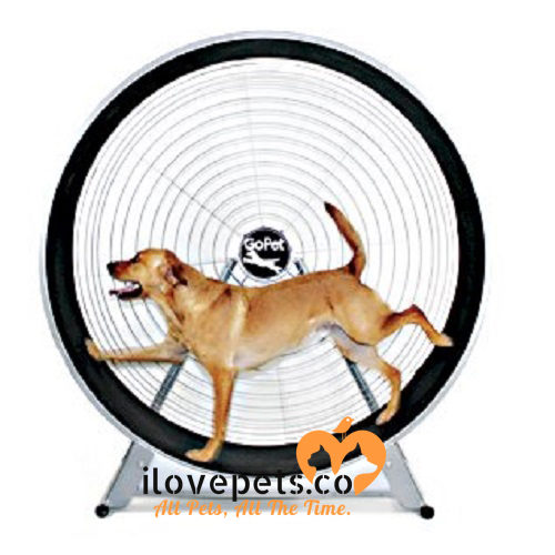 GoPet Treadmills for large dogs