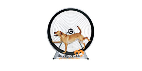 GoPet Treadwheel for large dog breeds