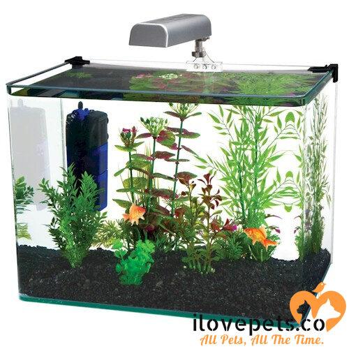 Beautiful 5 gallon Fish tank
